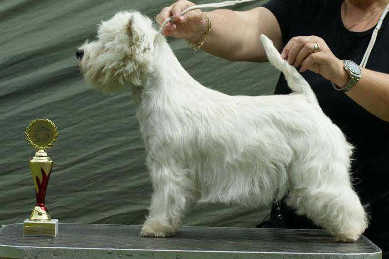 Lucie bester Junghund in Meisdorf