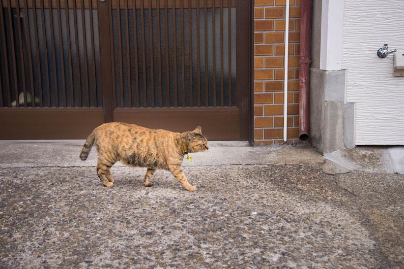 2018年3月18日(日曜日)谷中で見かけた猫 泰然としていました。