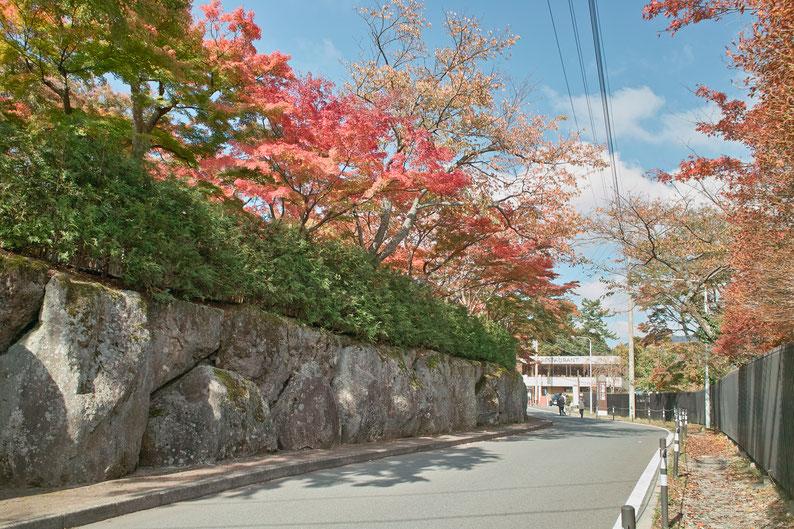 2018年11月8日 箱根強羅公園上バス停 SIGMA DP1S