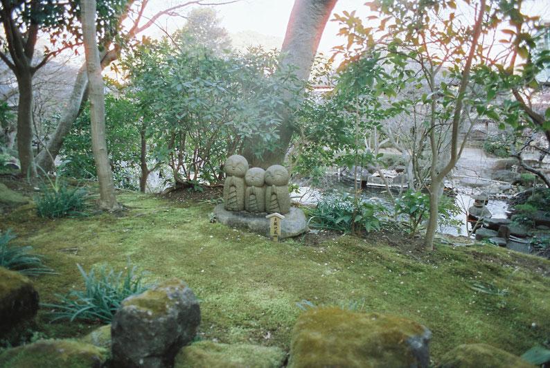 2020 Spring Kamakura HaseTemple PENTAX MV1  SMCTAKMAR 24mm f3.5