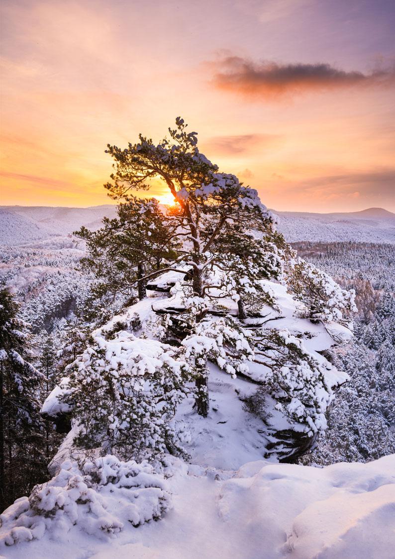 Pfalz Foto Pfälzerwald Winter Schnee