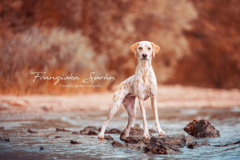 Franziska Spohn Fotografie - Tiershooting, Hundeshooting, Outdoorshooting, Lemondalmatiner
