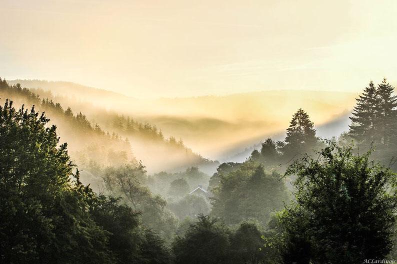 Une tonalité jaune or, comme si un voile de miel s'était répandu sur le paysage. La profondeur de l'image est une  sensation onirique, une illusion, voilée par une douce lumière qui établit une passerelle entre le ciel et les collines.