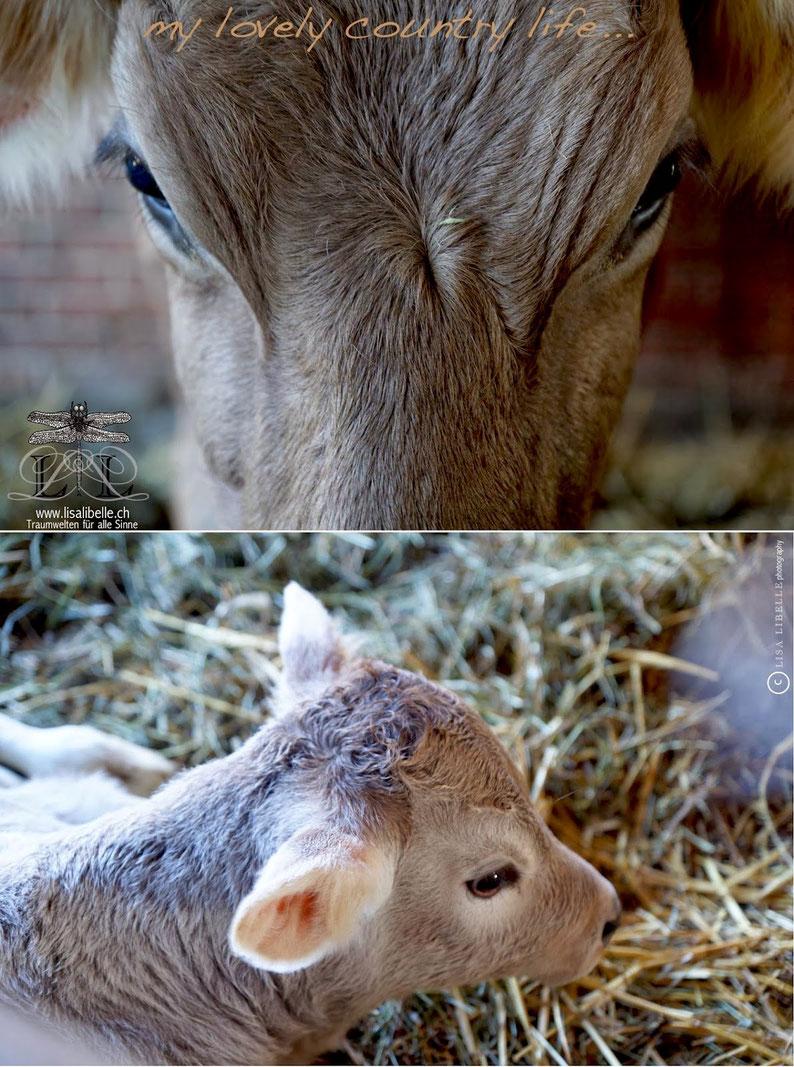 Frische Rohmilch von Kühen, die silofrei gefüttert werden. Die Verwendung jeglicher Zusatzstoffe oder gentechnologisch veränderter Mittel ist verboten.