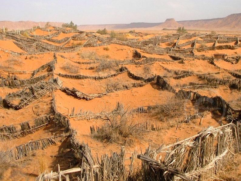 Barriere per contrastare la desertificazione, Bouarfa - Marocco