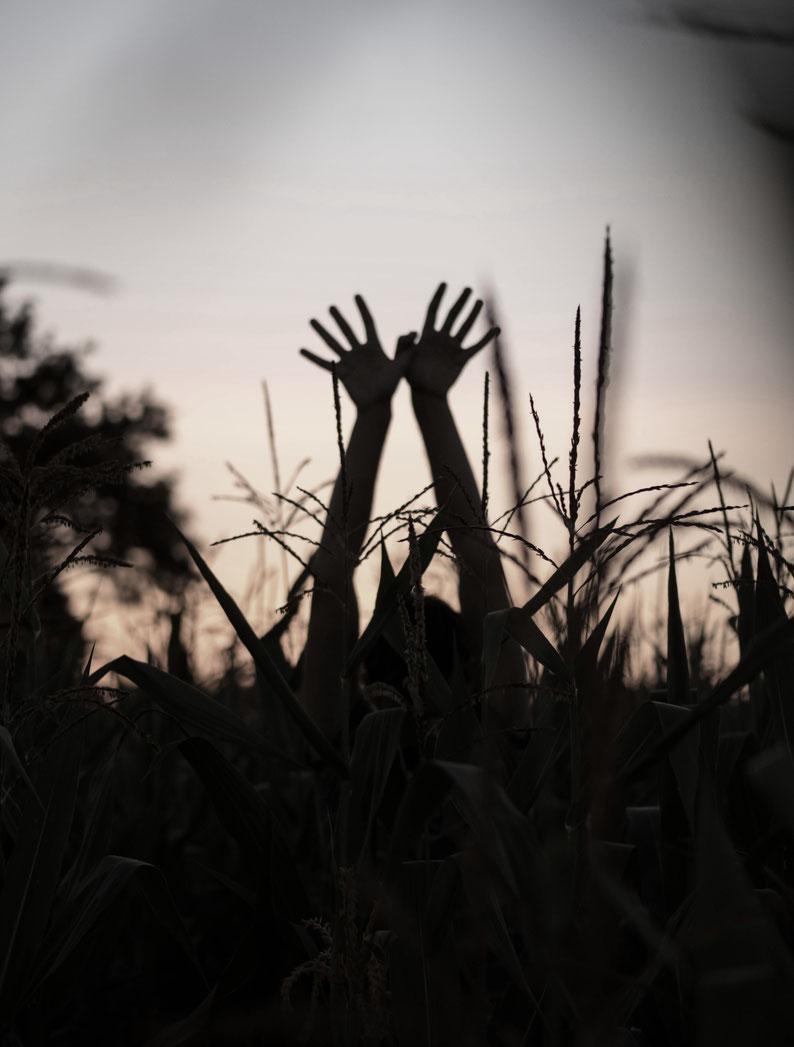 Retour en enfance dans les champs de maïs