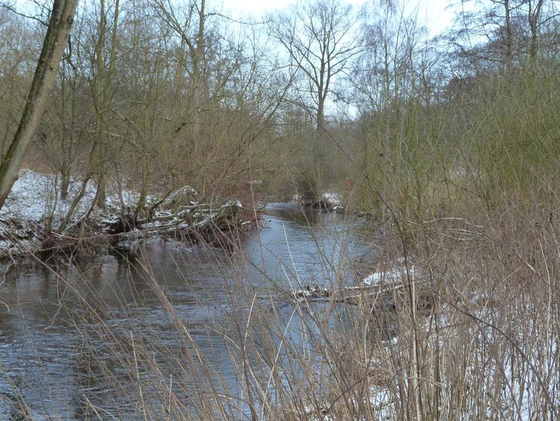 Bordvoll – ein naturnaher Abschnitt der Alster im Winter.