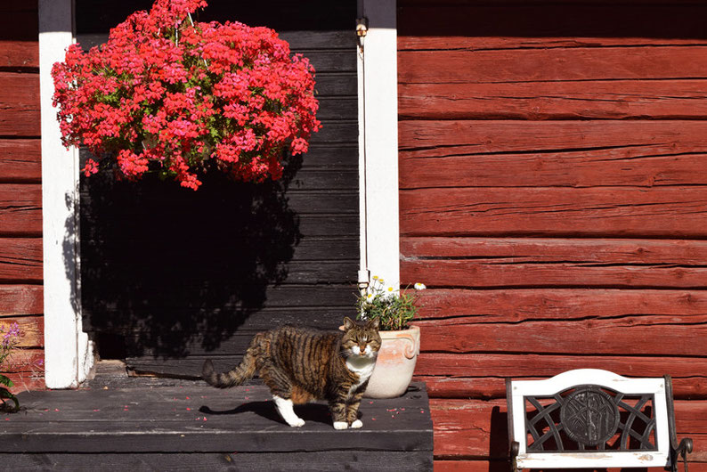 One of Our Short Breaks in Finland - Ann-Sofi's Lovely Cat in front of an Outbuilding