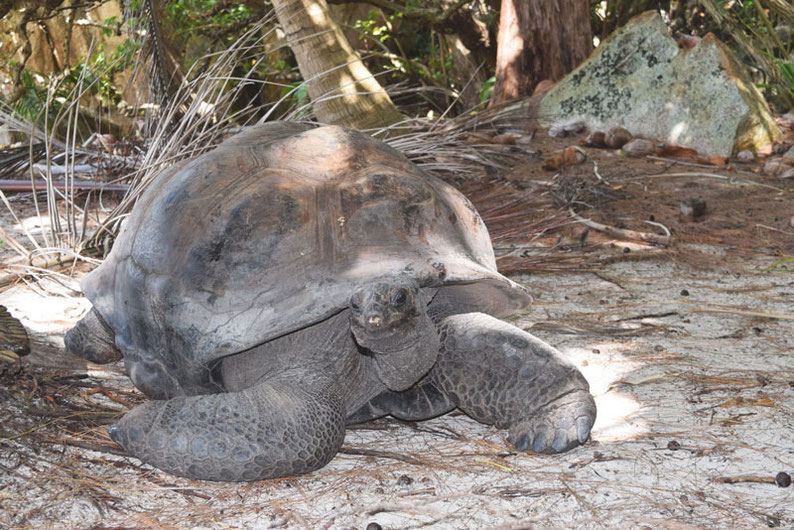 5 Things to Do in The Seychelles Islands - Curieuse Island