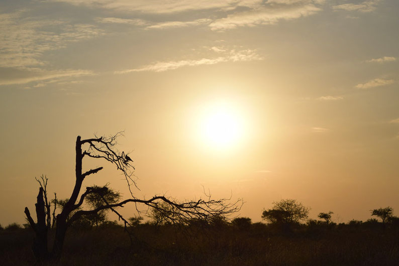 Your Guide to Kruger Park, South Africa - Sunsets