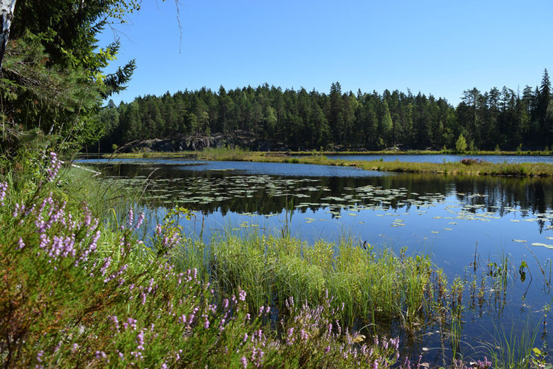 One of Our Short Breaks in Finland - Sandwich time at one of the places in Nuuksio National Park