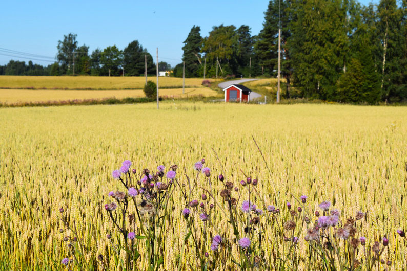 One of Our Short Breaks in Finland - The Finnish Landscape in Summer