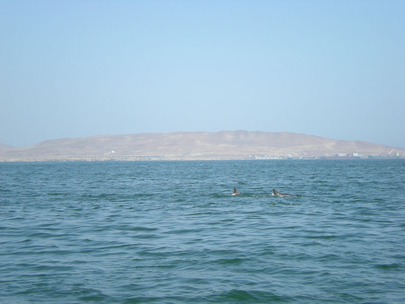 Peru and Bolivia in 3 weeks - Dolphins, Islas Ballestas
