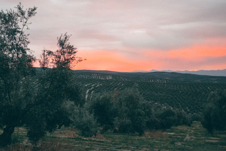 Biking Adventure in Spain - Sunset moments near Úbeda