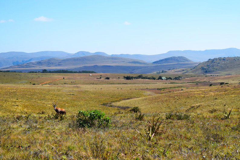 A Scenic Drive Through Swaziland - Malolotja National Park, Swaziland