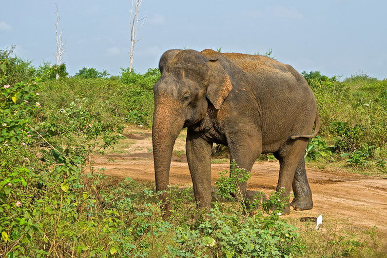 9 Days in Sri lanka - Watching an Elephant in Udawalawe National Park