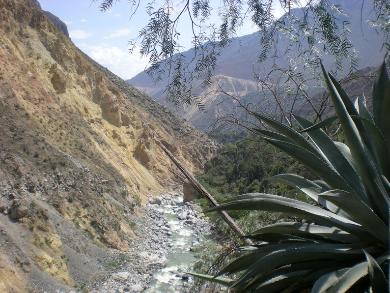 Peru and Bolivia in 3 weeks - Trekking Cañon del Colca
