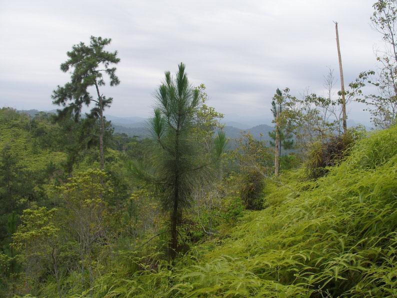 Belize - Cockscomb Basin Wildlife Sanctuary