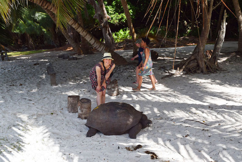 Our trip to the beautiful Seychelles islands - My first meeting with a turtle on Curieuse Island