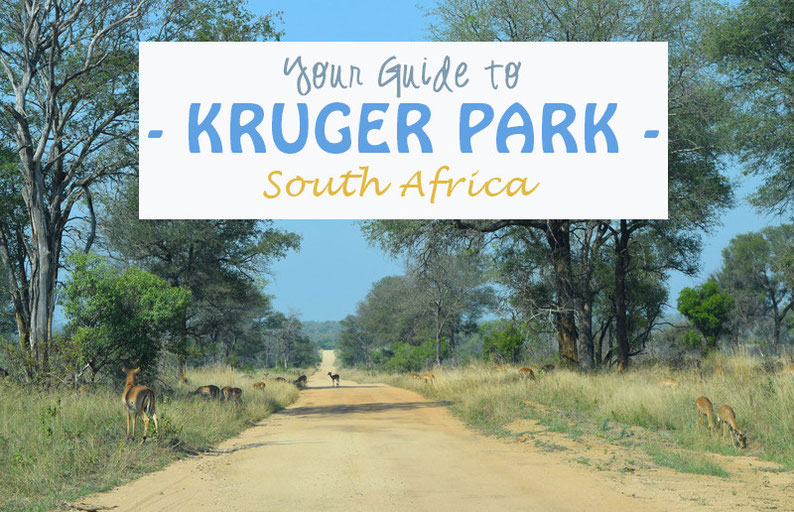Your Guide to Kruger Park, South Africa