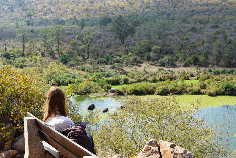 Your Guide to Kruger Park, South Africa - Observing Hippos