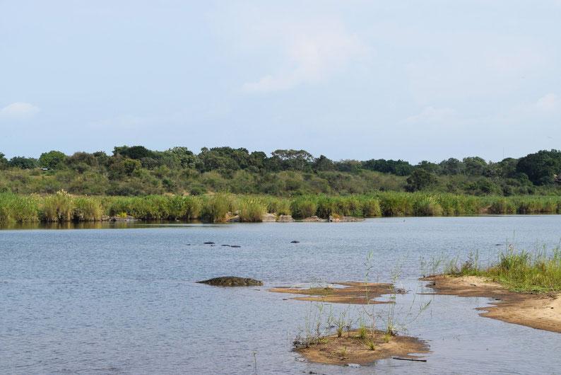 Kruger Park - Crocodile