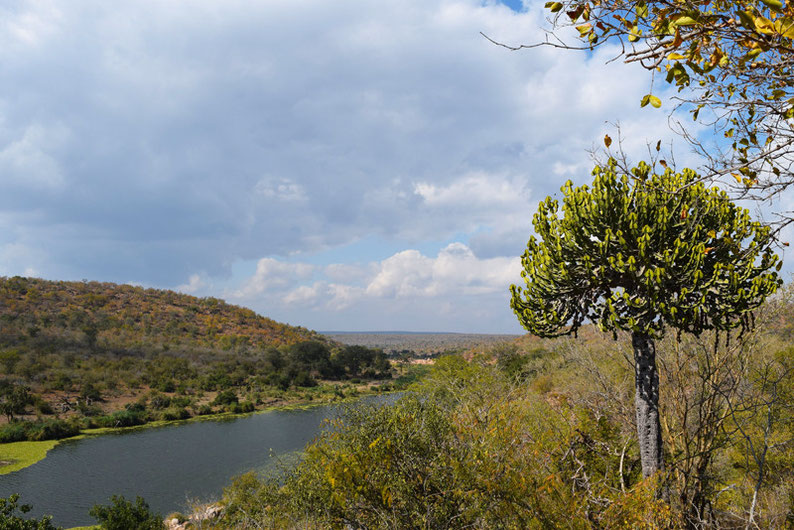 Your Guide to Kruger Park, South Africa - Landscape