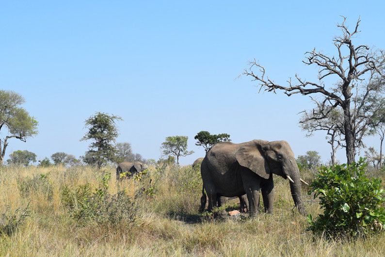 Your Guide to Kruger Park, South Africa - Elephants