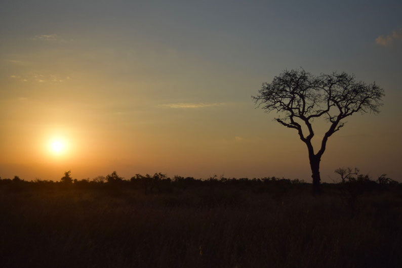 Your Guide to Kruger Park - Sunsets