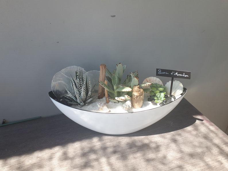 BASSIN D'ARCACHON N°2 /Bateau de plantes grasses et cactées à partir de 55€