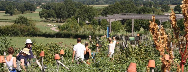 Visite guidée dans un jardin permaculture