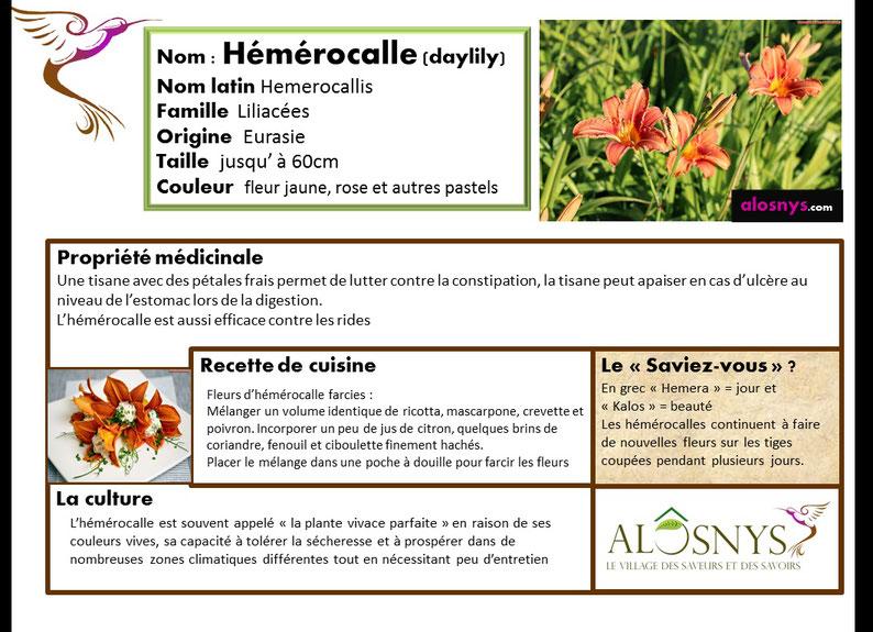 fiche hémérocalle, fleur comestible