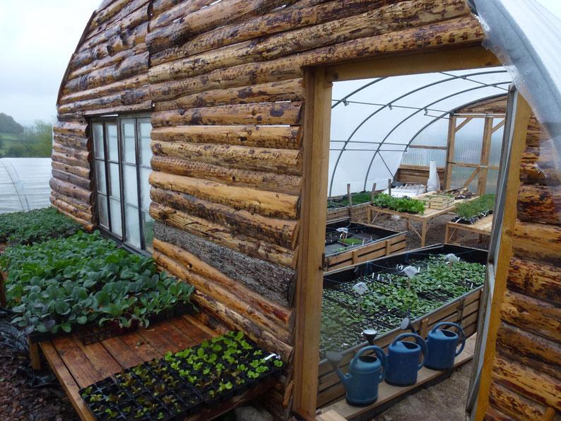 Nous n'avons pas que des plants de tomates!