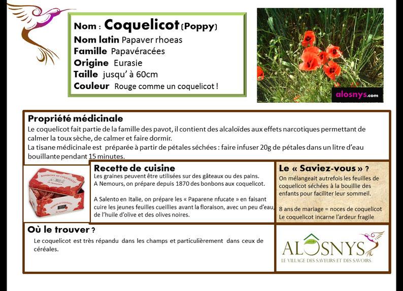 fiche coquelicot, fleur comestible