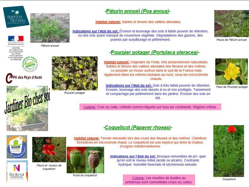 Les plantes bio indicatrices 9
