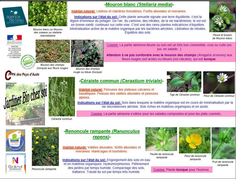 Les plantes bio indicatrices 2