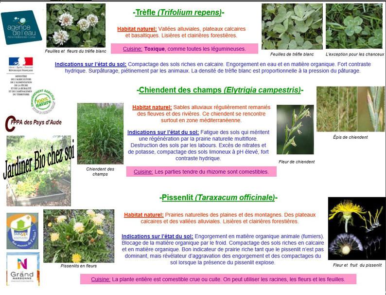 Les plantes bio indicatrices 5