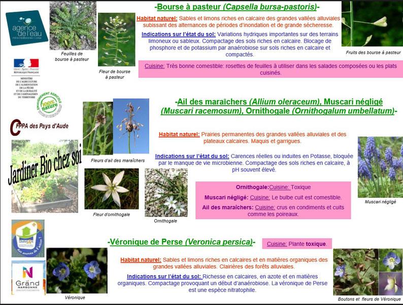 Les plantes bio indicatrices 6