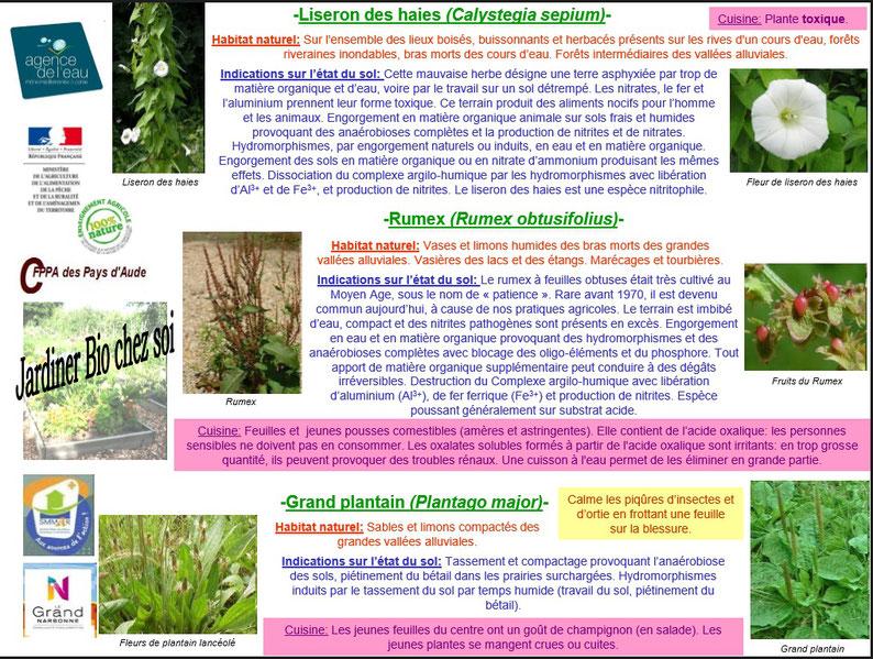 Les plantes bio indicatrices 4