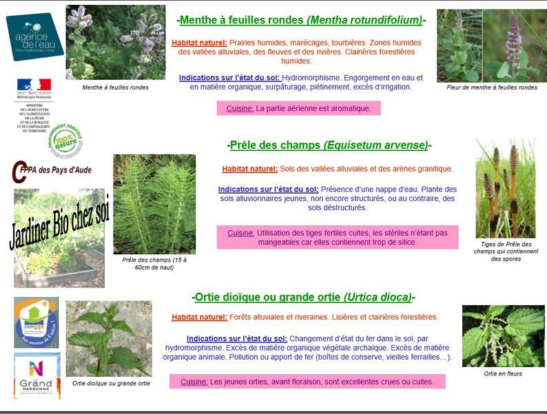 Les plantes bio indicatrices 3