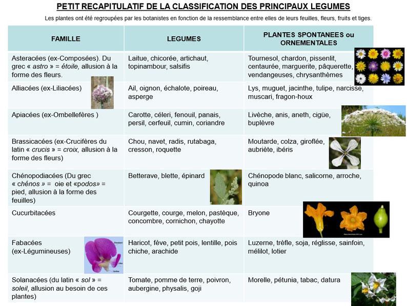classification des principaux légumes
