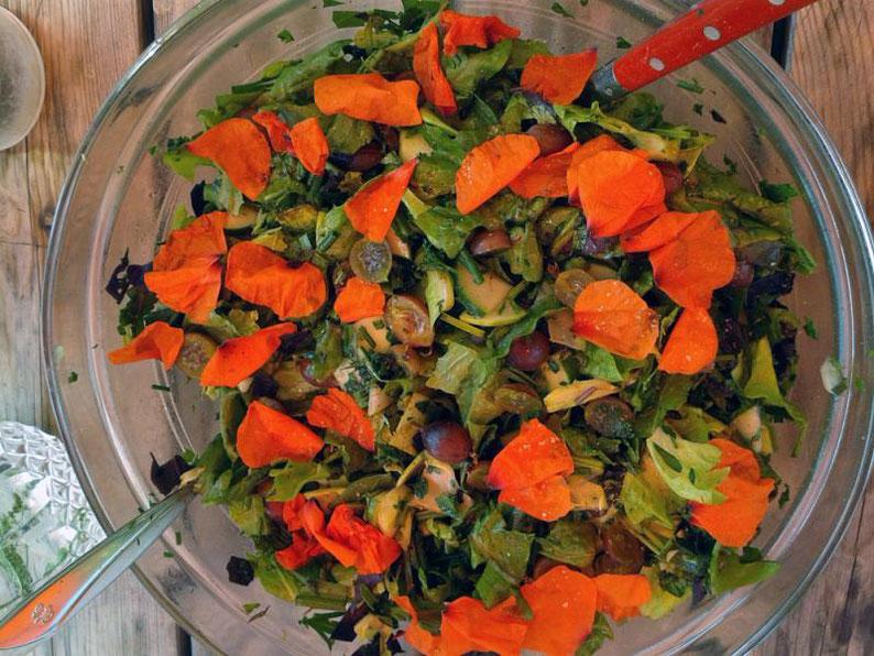 Salade avec des fleurs de capucine et groseilles à maquereaux
