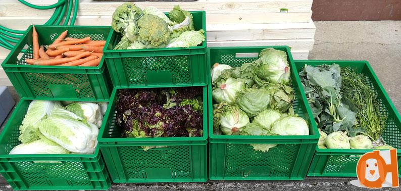 Drei mal in der Woche bekommen wir eine große Kiste voller frischem Gemüse für unsere Hoppler.