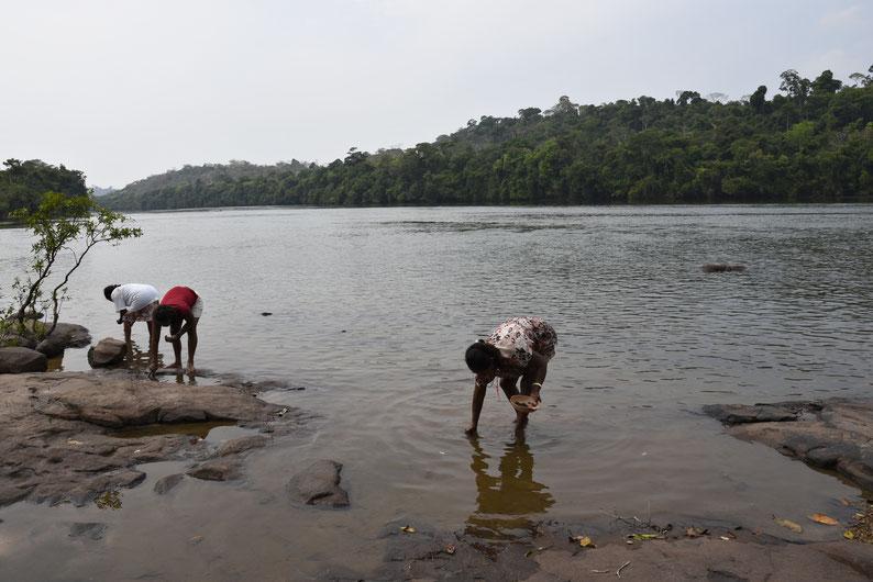 Três mulheres abaixadas estão catando moluscos bivalves da espécie Paxyodon syrmatophorus na beira do rio. Foto: Adriano Gambarini/OPAN.