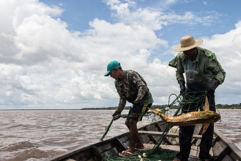 Dos pescadores sobre un bote recogen una red de pesca en un río amazónico. Los dos usan sombreros y no se ven bien sus rostros. En la red  hay un pez del género Oxydoras.