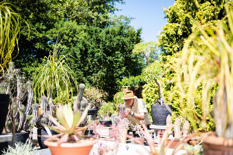 ART VOGEL verzorgt zijn cactussen HORTULANUS HORTUS BOTANICUS LEIDEN PLANTEN CACTUSSEN VOLKSKRANT KATJA POELWIJK