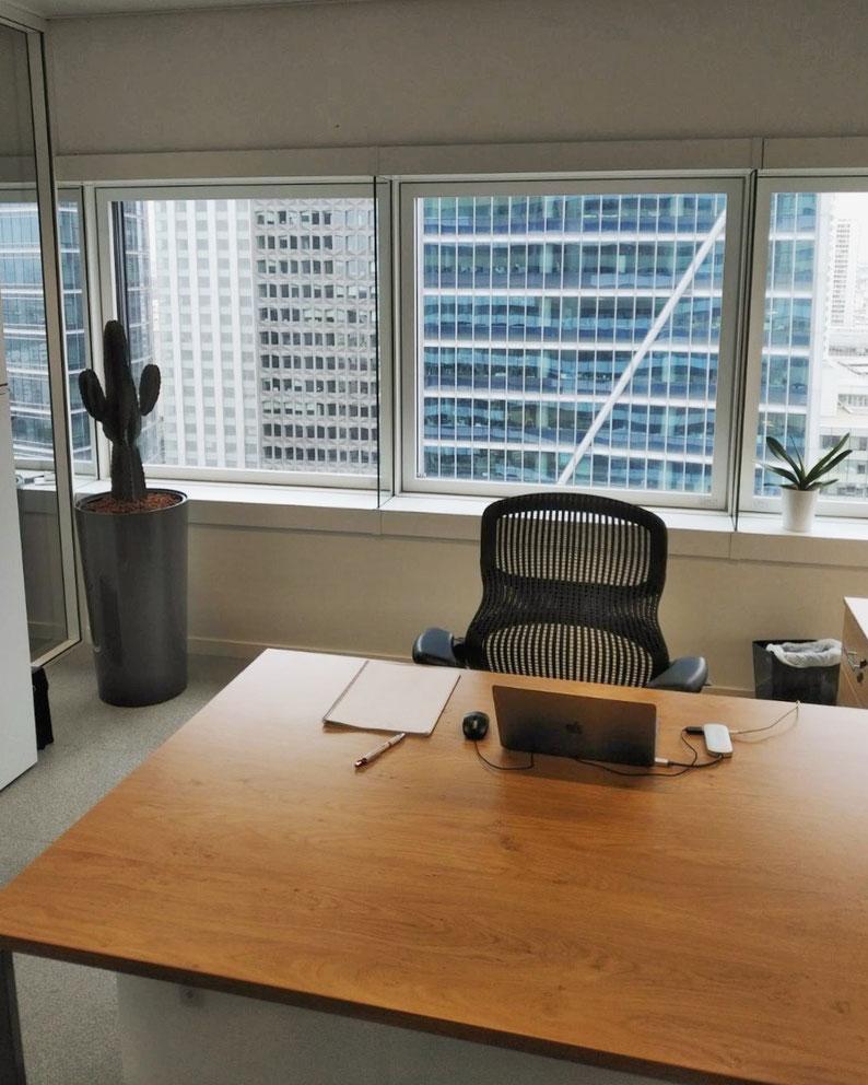 Paysagiste d'intérieur: Location de plantes d'intérieur pour vos bureaux à La Defense