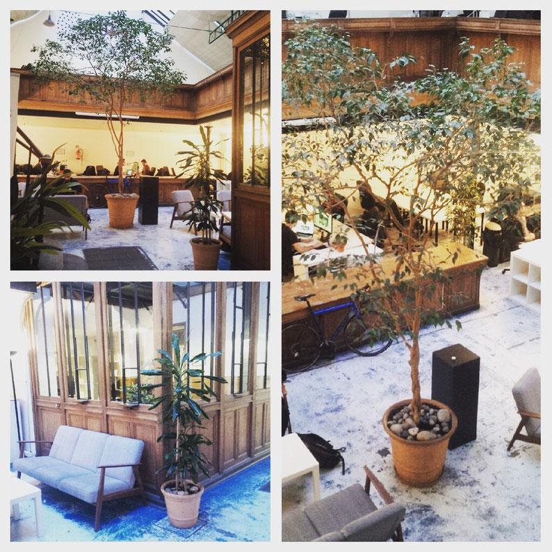 Entretien des plantes d'intérieur en entreprise Paris