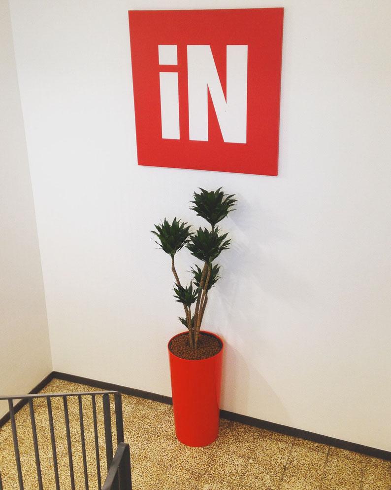 Paysagiste d'intérieur: Location de plantes vertes pour vos bureaux à Paris. Ces pots sont en plastique recyclé.