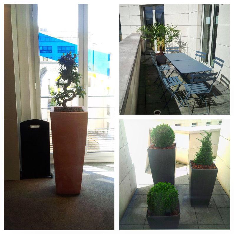 Aménagement de terrasses. Cette société nous confie l'entretien pour son siège parisien de ses espaces extérieurs et intérieurs. Ici, des Buis en boule, des Ifs en pyramide, un Palmier de Chine et un Bonsaï, le Ficus microcarpa.